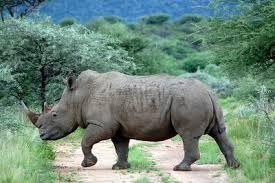 Bildergebnis für afrikanische tiere