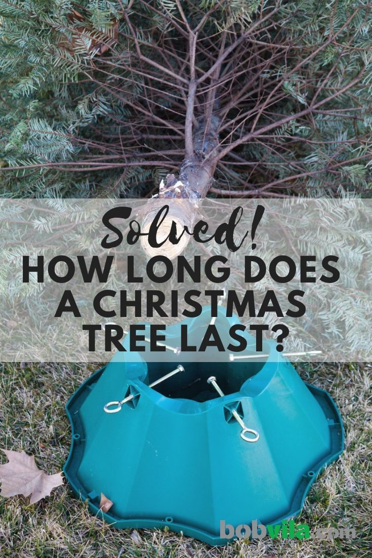 Solved! How Long Does a Christmas Tree Last? | Christmas ...