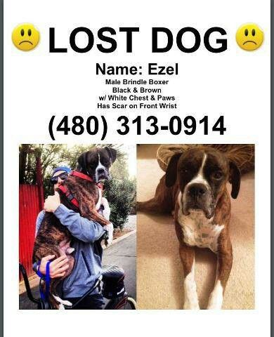 Lost Dog Scotsdale Arizona Please Share Losing A Dog