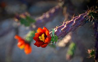 Nature - Jon Van Gilder Photography Studios