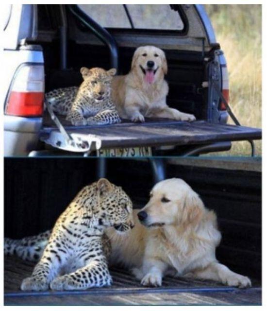 Amazing Friendship Of Animals