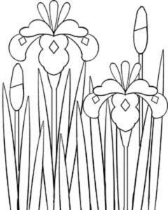 花の塗り絵 白黒イラストぬりえ 素材屋じゅんのモノクロ画像絵 ぬり絵フリー無料花のイラスト 花 イラスト 花の塗り絵 あやめ イラスト