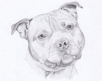 staffordshire bull terrier pencil drawings - Google Search ...