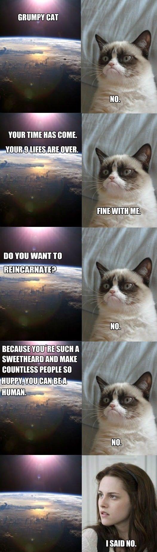 Grumpy cat dies | Truths and Funnies | Grumpy cat humor