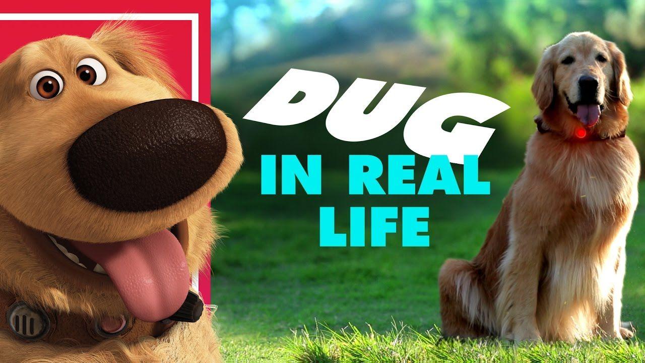 Disney•Pixar's Dug the Talking Dog In Real Life | Oh My Disney IRL