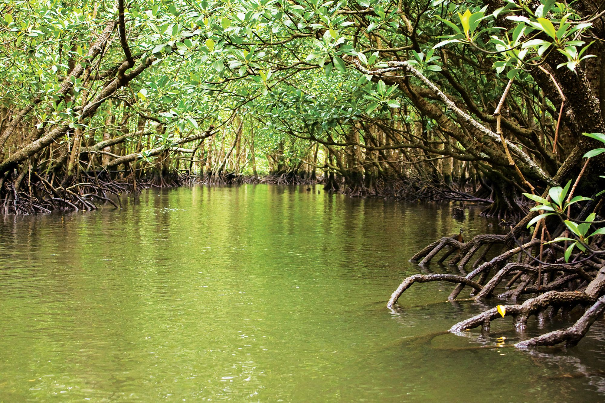 Resultado de imagen de manglares