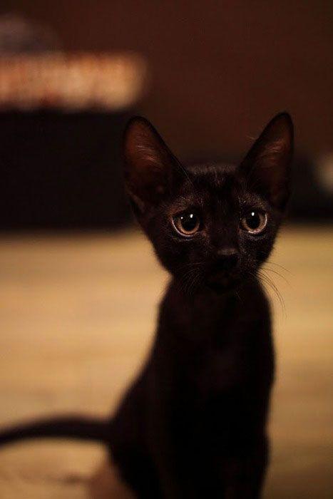Love little black kitties!
