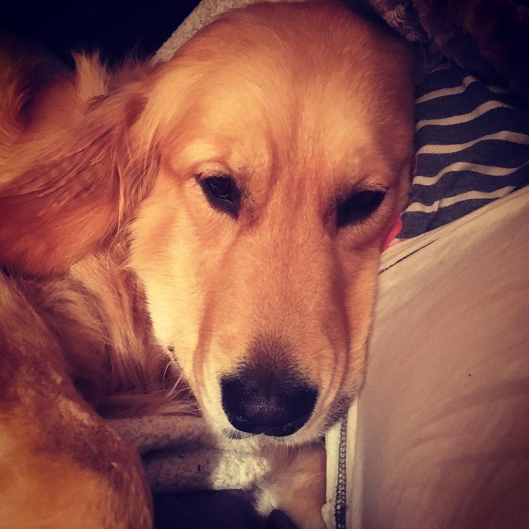 Pin on Doggie Photos