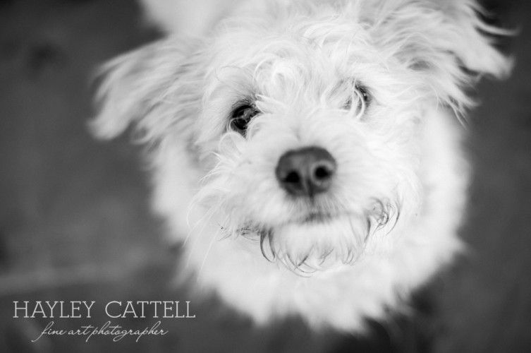 Dog Pet Portraits Photography Hayley