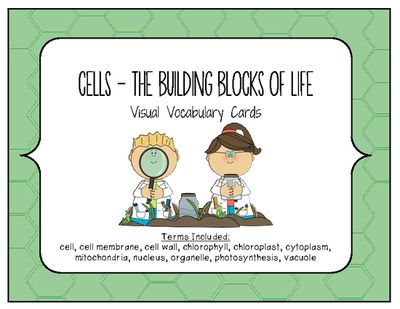 Cells Visual Vocabulary Cards Cell Organelles From Iteachstem On