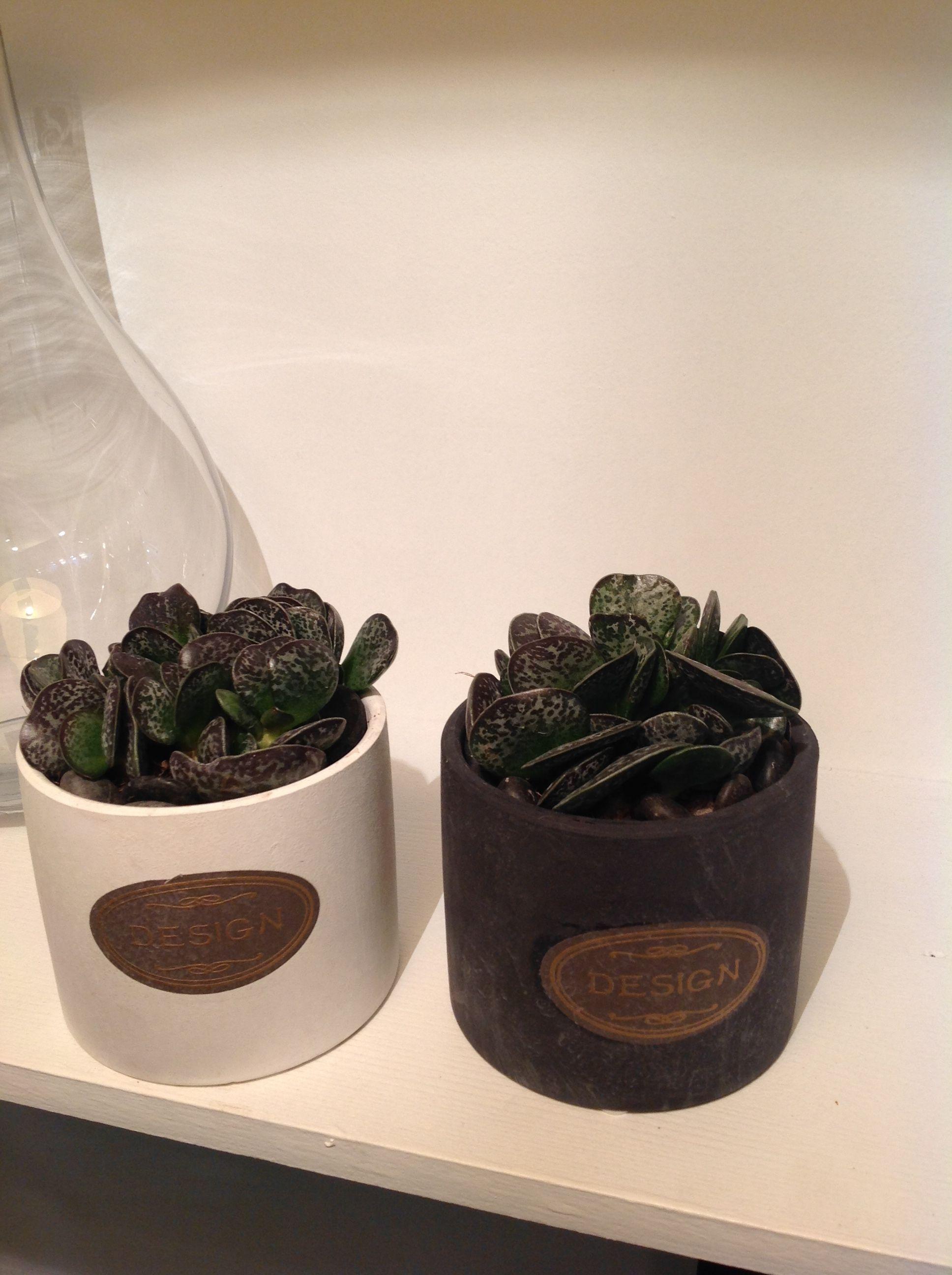 Plante fleurie ou verte, cactus, plante grasse, arbre