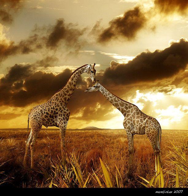 Africa | Wildlife | Safari.