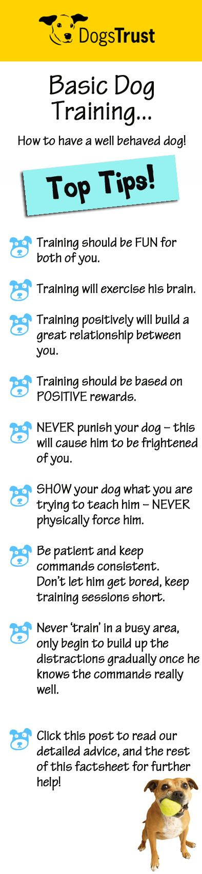 Training can be started at any age, the sooner the better. You can start simple training with your puppy as soon as he has settled into his new home! Follow our top tips for some grrreat ideas, on how to make your new canine companion the best behaved dog in the park! WOOF!