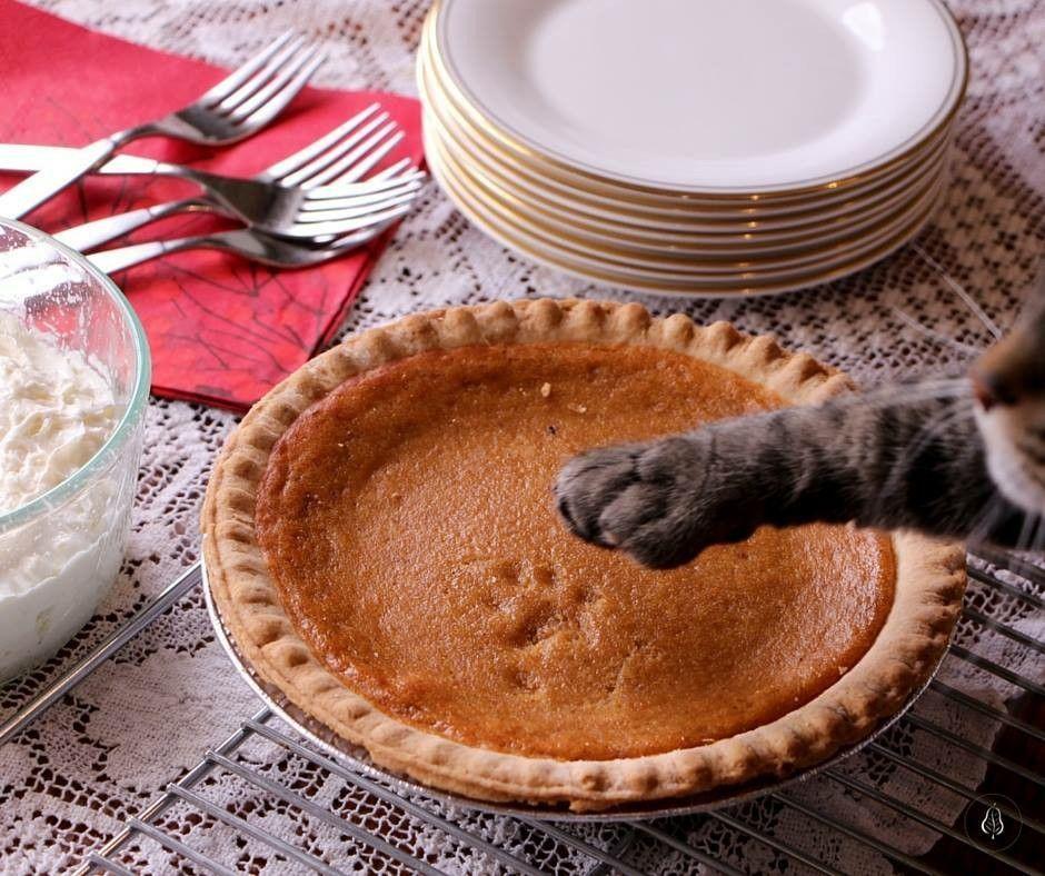 будет прикольные картинки пирожки с котятами своем