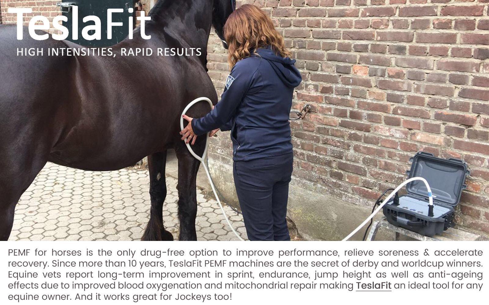Pemf Therapy For Equines Teslafit Pemf Pemf Therapy Pemf Horses