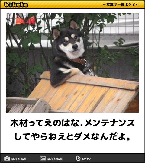 爆笑 こんなの絶対に笑ってしまう イヌ画像でボケてが面白すぎる 57枚 犬 画像 可愛い犬 動物 おもしろ