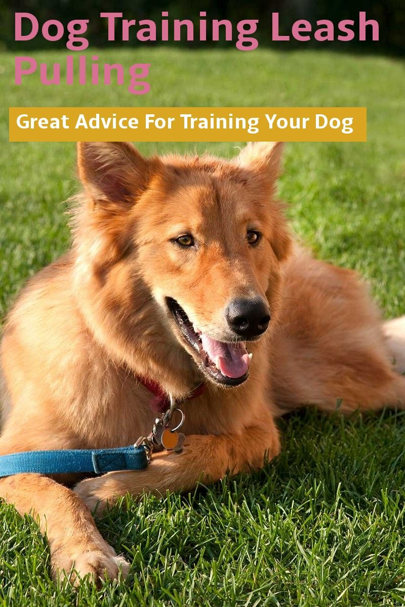 Some Tips On Dog Training Leash Pulling For Pet Buyers Along With