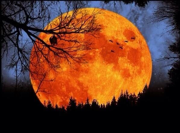 Look for harvest moon tonight - love Harvest. Moons as much as Fall clothes!