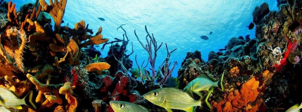 Playa Del Carmen Pro Dive Mexico Cozumel Diving Mexican Vacation Cozumel Mexico