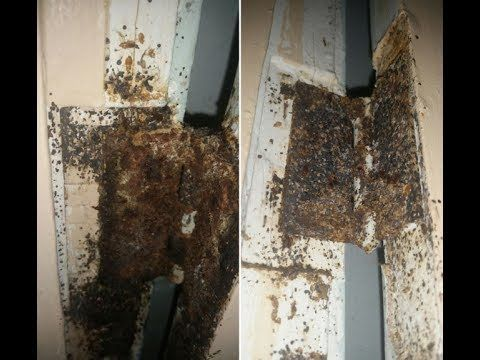 Video Worst Roach Infested Apartment Revealed