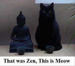 Zen And Meow Dump A Day Cat Jokes Cats Friday Funny Pictures