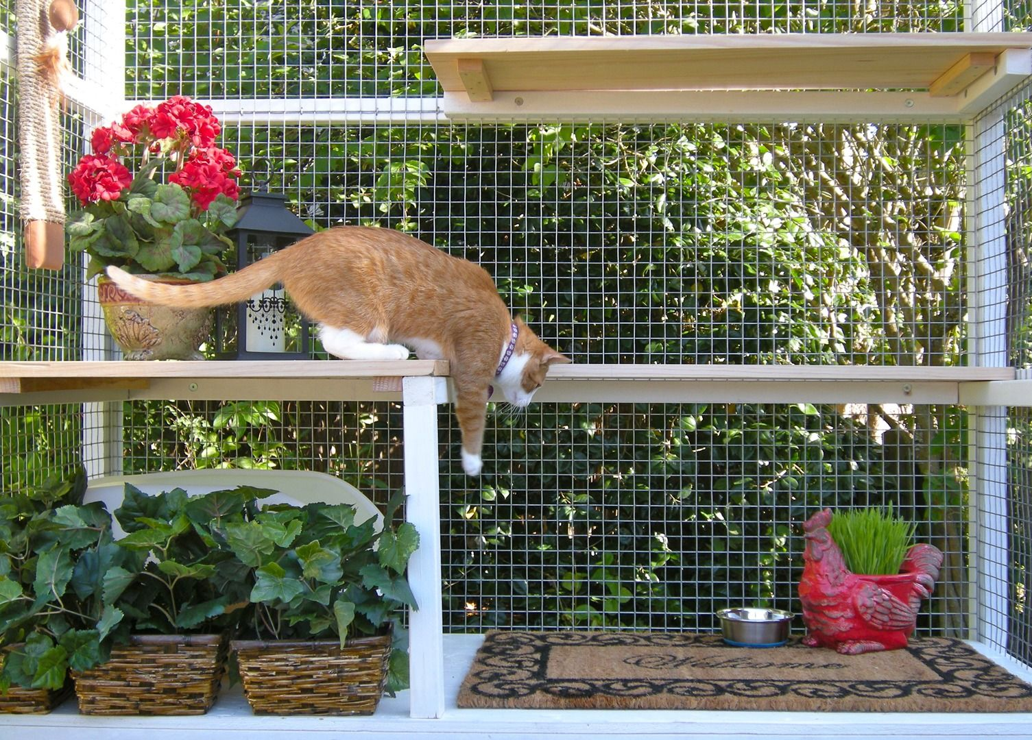Diy catio plan the sanctuary catio plans with 6x8 and 8x10 options - Catio Spaces Diy Catio Plans And Cat Enclosures