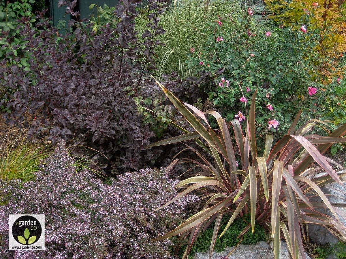Chocolate Foliage Planting Combination