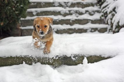 Did You Know Pets Can Catch Colds Too Upper Respiratory Tract