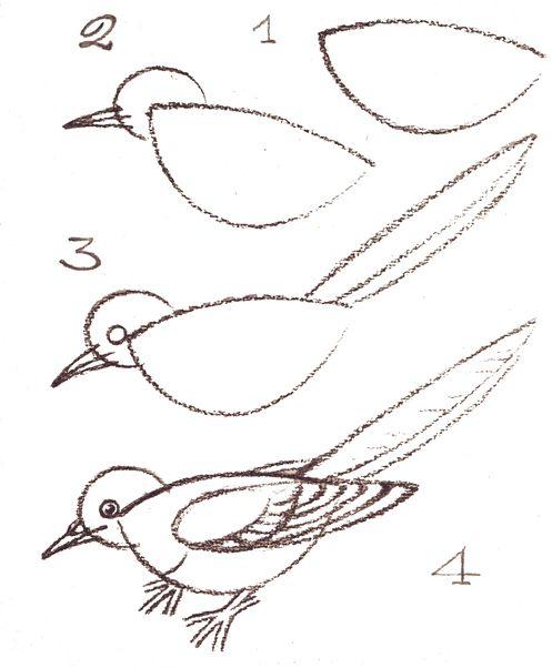 How To Draw A Bird Drawing Tips Vogels Tekenen Een Vogel