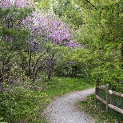 http://us.123rf.com/400wm/400/400/geniebird/geniebird1207/geniebird120700275/14590697-beautiful-spring-woodland-landscape-with-pink-flowering-redbud-in-full-bloom-along-a-gravel-path.jpg