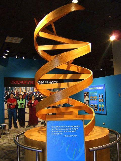 Wooden Dna Helix Dna Rna Genetics Molecular Biology Dna