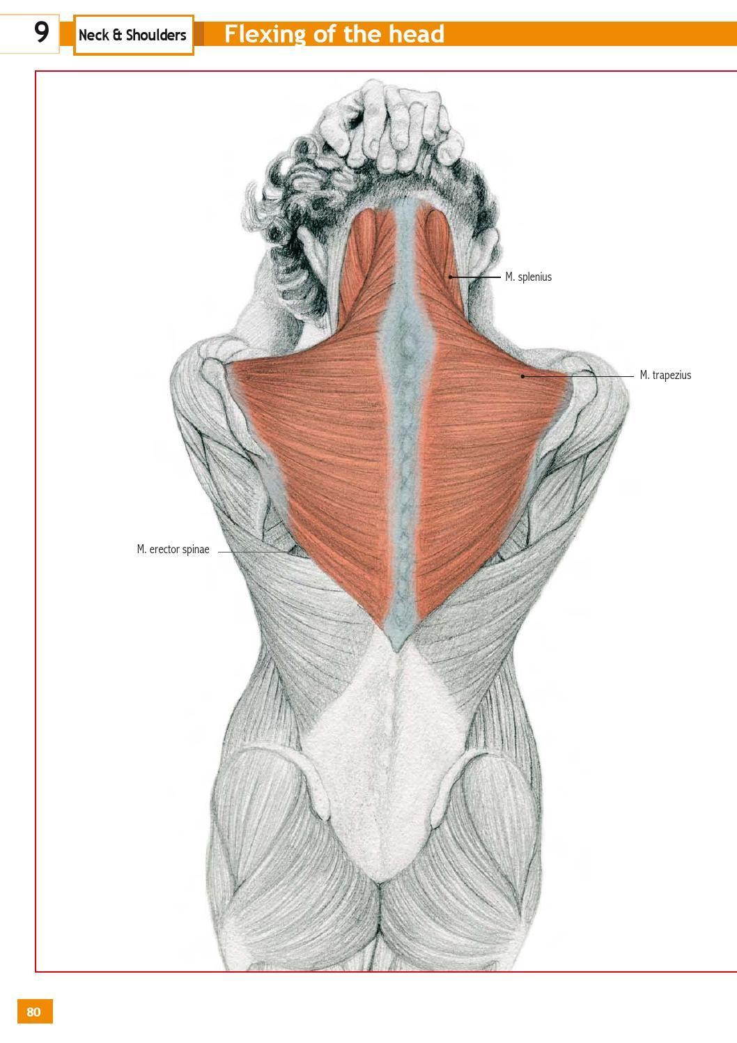 Stretching exercises encyclopedia | Pinterest | Anatomía ...