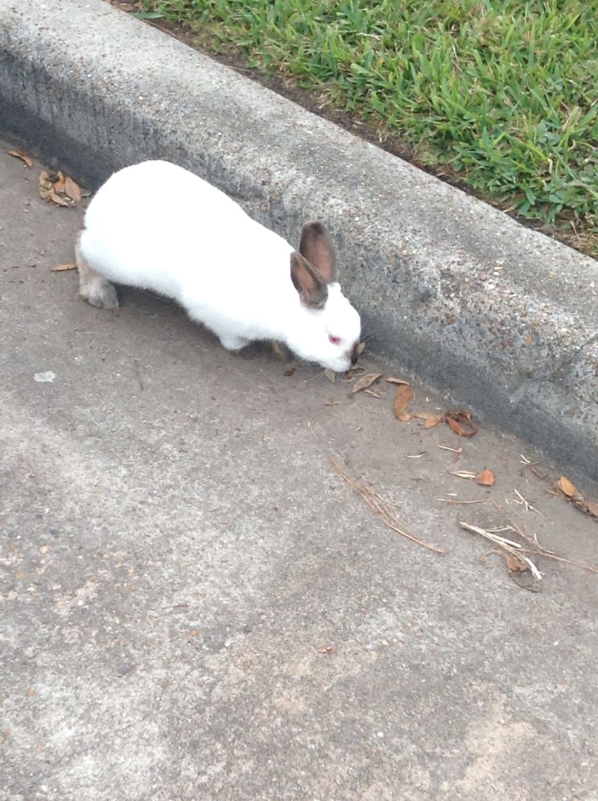I found a rabbit on the road. I named him Bluebell. #sherlock