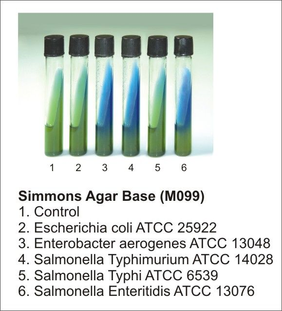 Simmons Citrate Agar Microbiology Dehydrated Culture Media Biochemical Identification Media Microbiology Medical Laboratory Science Microbiology Study