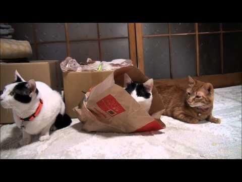 Paper bags and cats