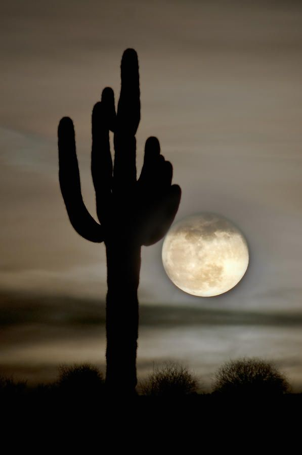 (via Full Moon Photograph by Jacek Joniec - Full Moon Fine Art Prints and Posters for Sale)