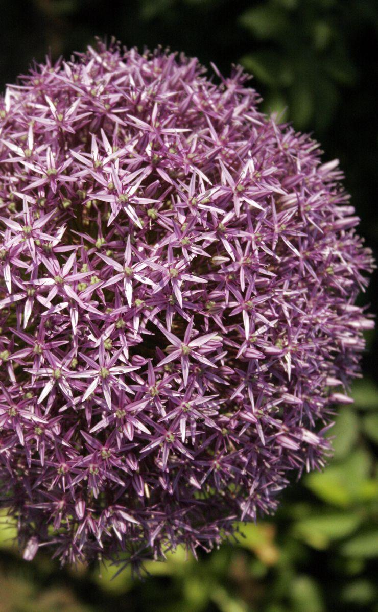 Pflanzen Fur Trockene Und Sonnige Standorte Durreresistente Pflanzen Garten Pflanzen Stauden