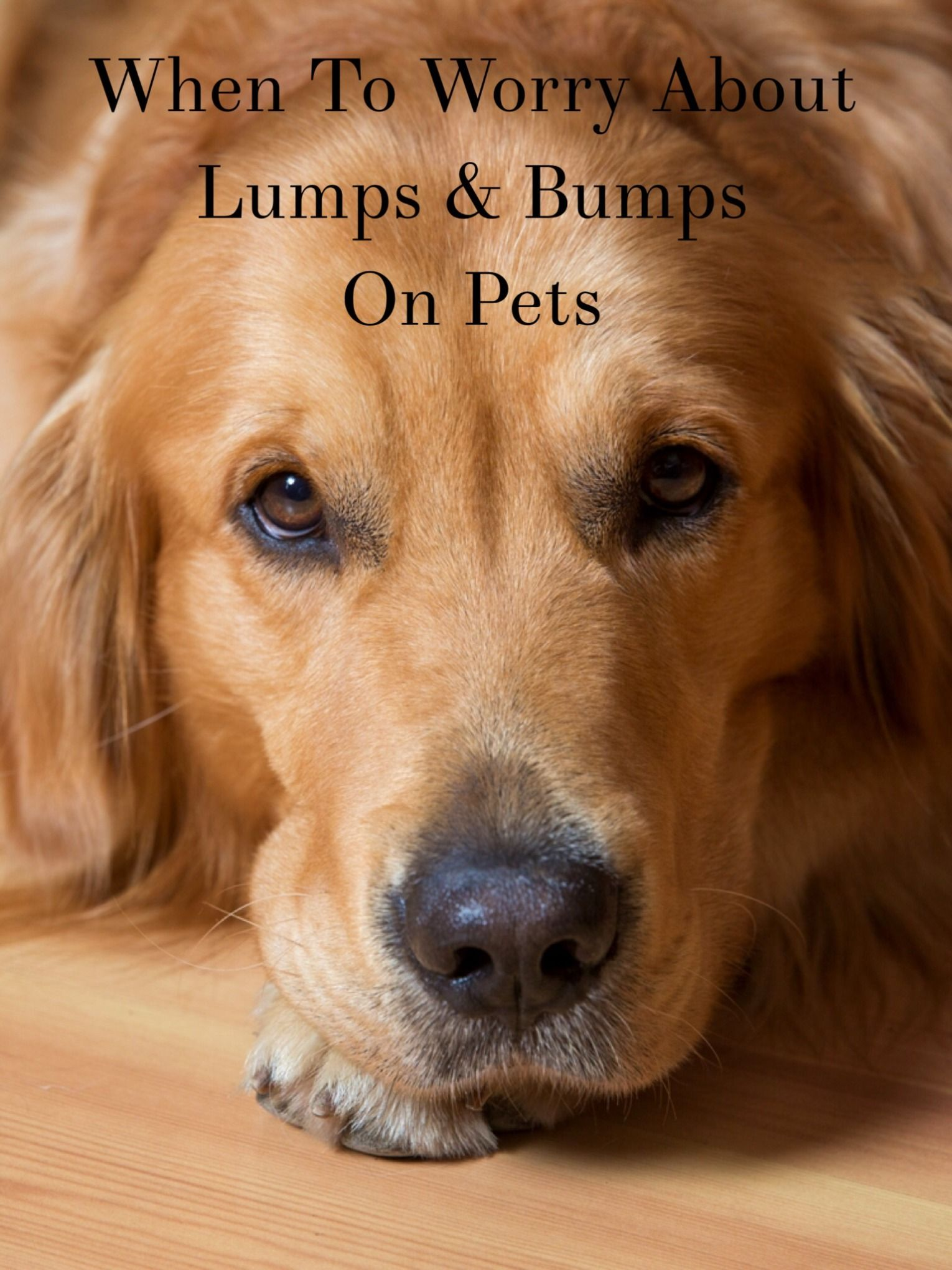Have you found a lump on your pet and you aren't sure what