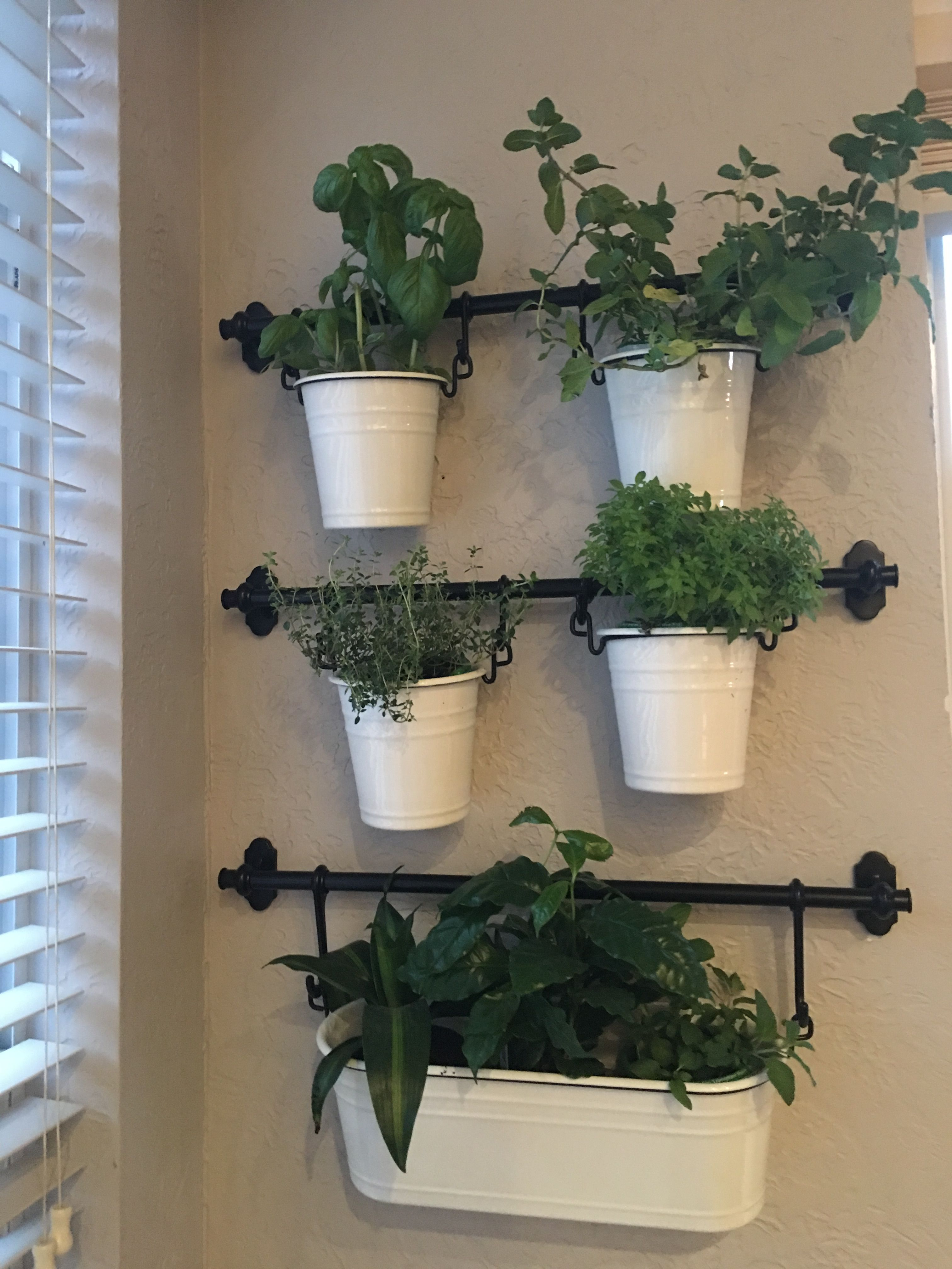 Pin By Laura Pedace On House Plants Hanging Herb Gardens House Plants House Plants Hanging