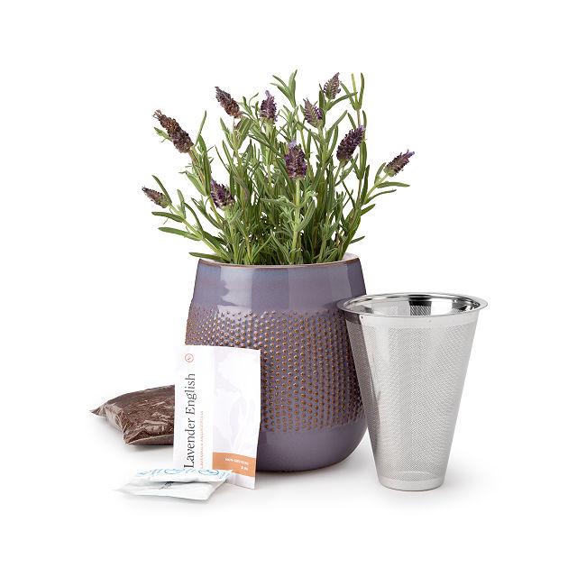 Self Watering Lavender Grow Kit Gardening Gift Uncommon Goods In 2020 Grow Kit Garden Gifts Self Watering
