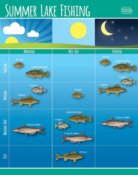 Learn how to fish in the summer by time of day and by for Best time to go bass fishing
