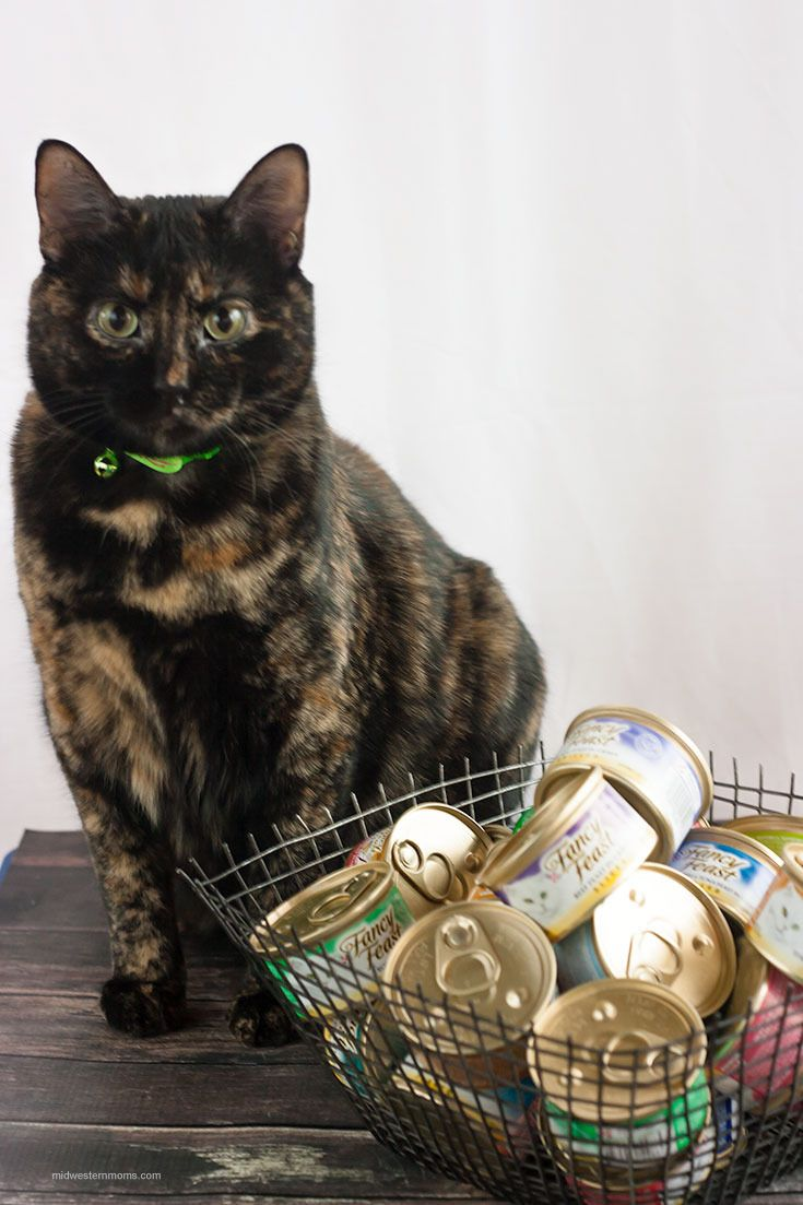 Stocking Up And Saving For The Holidays Petsmartcart Miss Kitty Canned Cat Food Cats And Kittens
