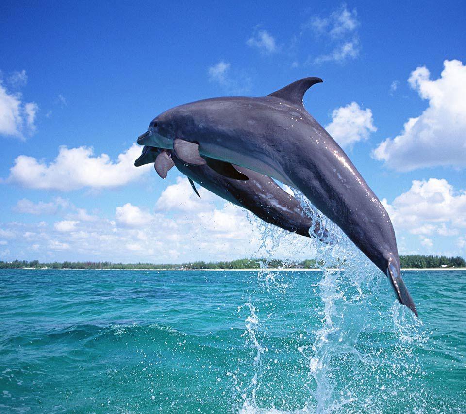 sea animals animals,sea animals,marine animal,sea