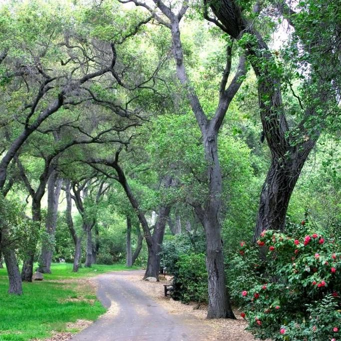 The Oak Forest at Descanso Gardens California garden