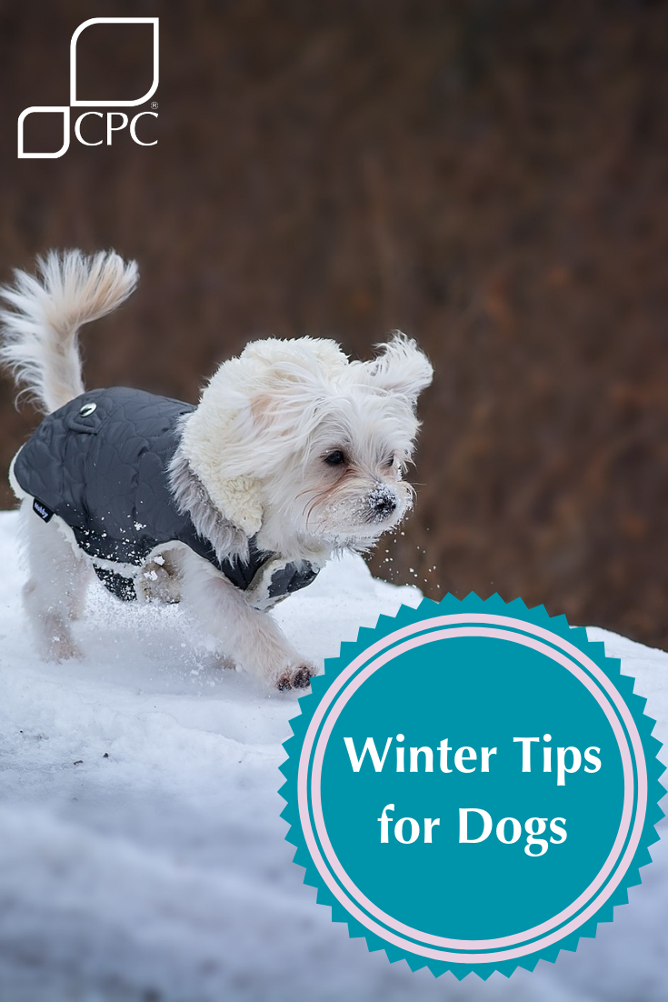 Winter Health Tips To Keep Your Dog Safe Pets Cute Dogs And