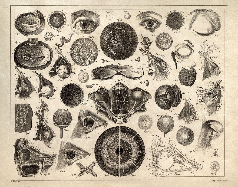 Eye Chart Diagram Print - Vintage Illustration Anatomy Print ...