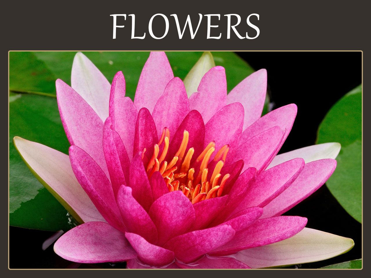 Flower Meanings Birth flowers, Flower meanings, Language
