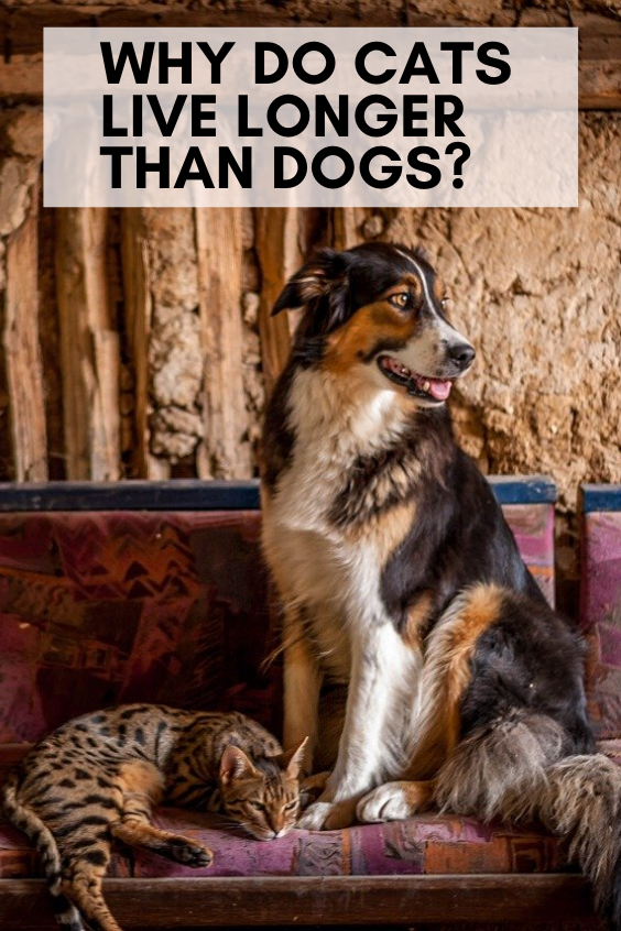 Why Do Cats Live Longer than Dogs Why Do Cats Live Longer than Dogs Cute pets puppy happy dog animals training dog funny dog puppies dogs breeds treats big dogs Breed Inf...