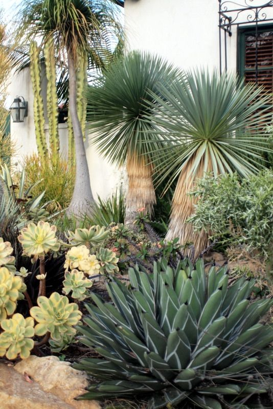 Xeric Plants Agave Ponytail Palm Yucca Cactus