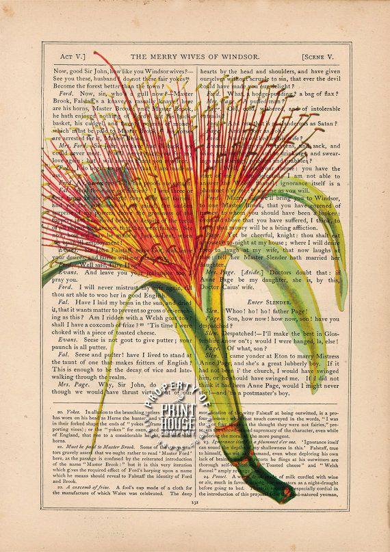 Flower Book Print Pachira Money Tree Plant by PrintHouseCompany